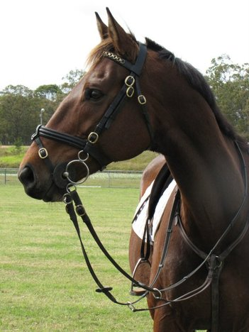 Hervey Bay  Equine Assisted Counselling,