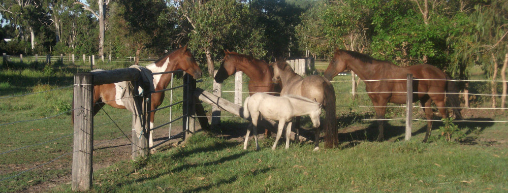 Equine Therapy Hervey Bay,Equine Therapy Maryborough,Equine Therapy Bundaberg